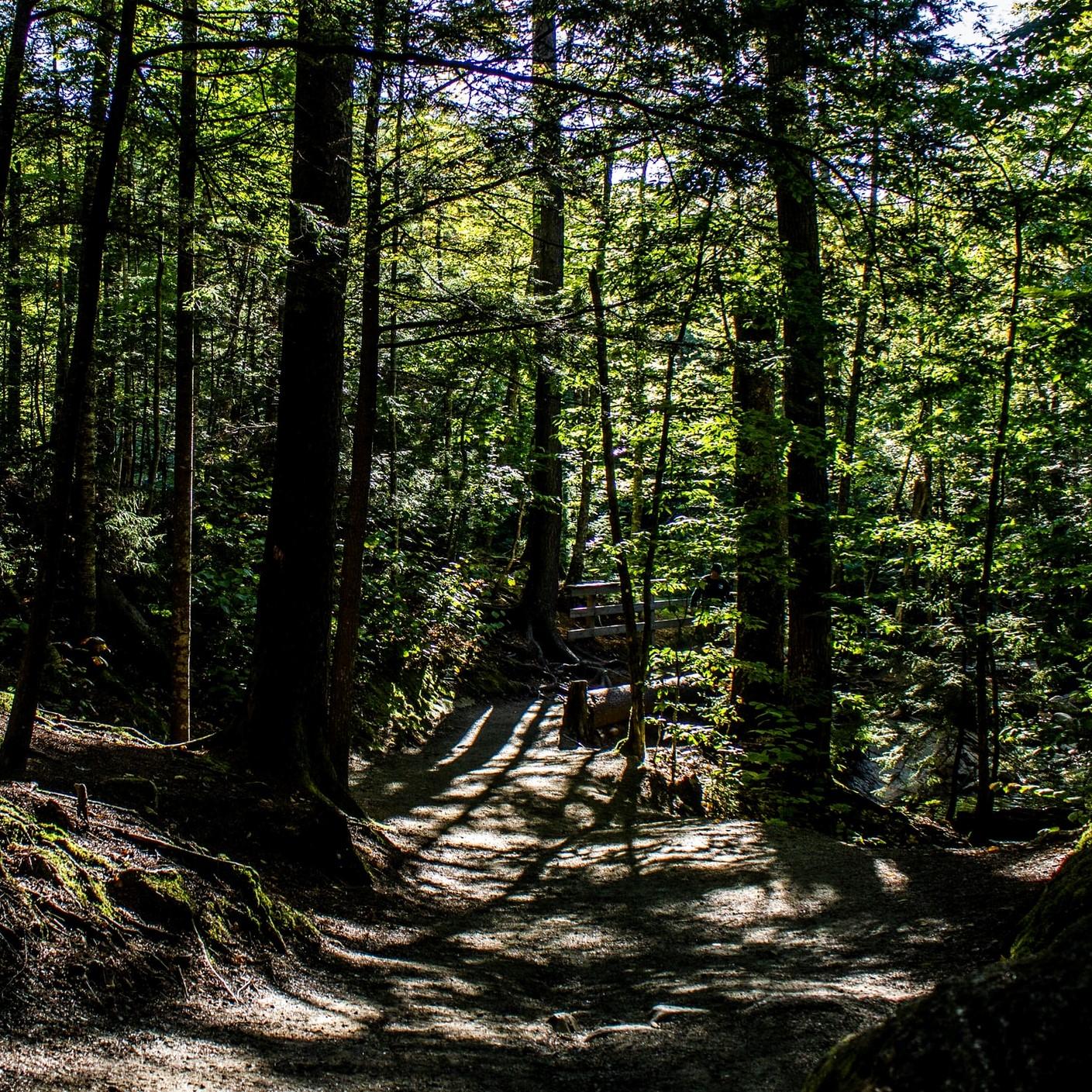 Ecologische motieven achter Van Eedens kolonie Walden